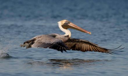 Denuncian caza de aves en Sabana de La Mar
