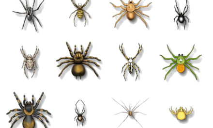 Arañas, mitos y realidades…