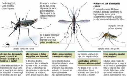 Universidad de Puerto Rico y Oxford crearán juntas vacuna universal contra dengue
