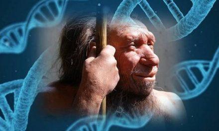 En nuestro ADN está la impronta del Neanderthal