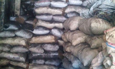 Medio Ambiente incauta miles de sacos de carbón en operativos realizados a nivel nacional