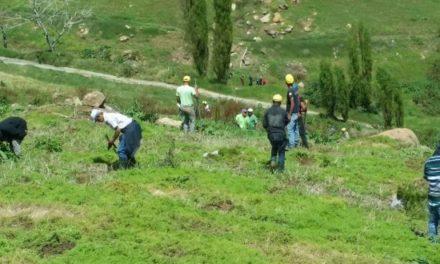 Se inicia la reforestación de Valle Nuevo