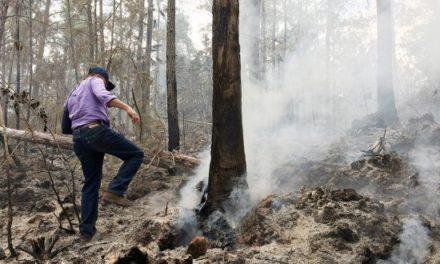 Traficantes de Guaconejo (usado para hacer perfume) incendian la Sierra de Bahoruco