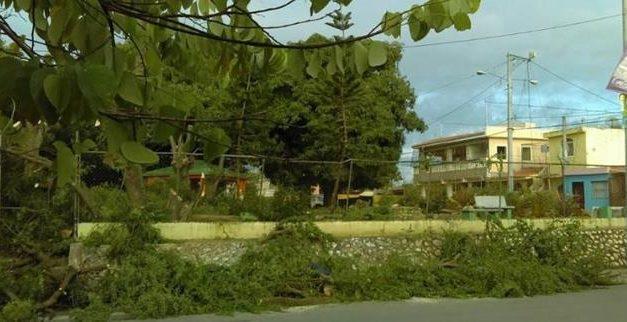 Comunitarios dicen ayuntamiento de Los Alcarrizos derriba árboles de más de 60 años