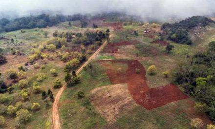 """Academia de Ciencias denuncia """"devastación"""" de cuenca del río Mulito"""