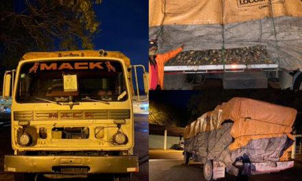 Incautan camión cargado de madera
