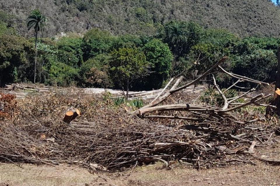 Prisión a hombre cortó árboles centenarios