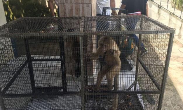 Arrestan dos por explotación de animales exóticos